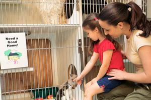 adopting-pet